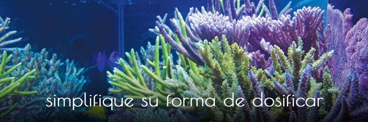 banner-coralls